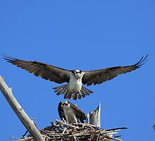 Dang man, don't land on me ! by kathy s gillentine