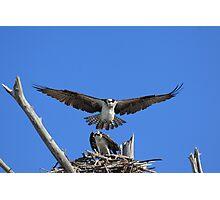 Dang man, don't land on me ! Photographic Print