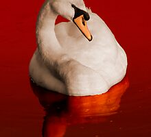Blood Swan by Rustyoldtown