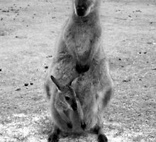 Wild Wallaby & her Joey by Samantha  Goode