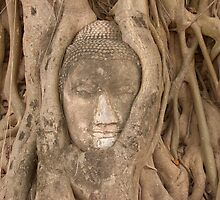 Buddha's Face in a Tree by Christian Eccleston