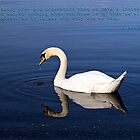 Killaloe Lake Swan  by Alfredo Encallado