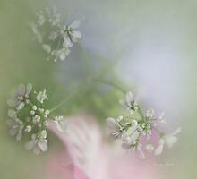 Herbal Remedy by Carolyn Staut