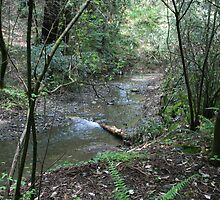 Babbling Brook, Armstrong Redwood State Reserve by Maurine Huang