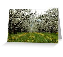 Hood River Blossom Landscape Greeting Card