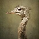 Portrait of a Rhea.. by polly470