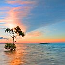 That Tree - Wellington Point Qld by Beth  Wode