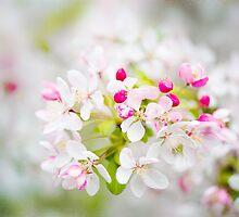 Spring Dreams by Jacky Parker