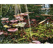Pond Life Photographic Print