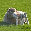 one small step for a lamb by Steve