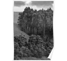 Hillside Trees Poster