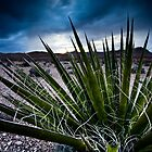 Screaming Yucca by Sabin Orr