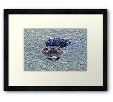 Wary gator! Framed Print