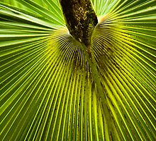 Palm leaf pattern by Margaret Whyte