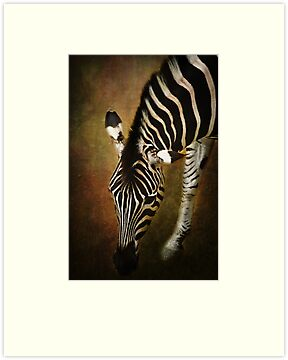 Z is for....Zebra by Lissywitch