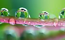 Drops of Green by yolanda