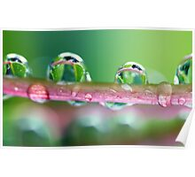 Drops of Green Poster