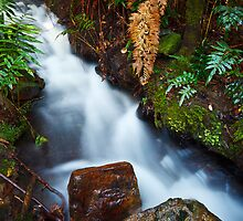 Stream on Betts Vale Track, Mount Wellington by Chris Cobern