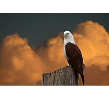 The Evening Perch Photographic Print