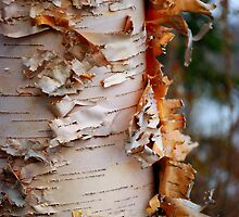 Shredded Bark by Randall Talbot