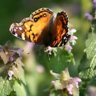 Orange Butterfly by DebbieCHayes