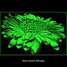 Gerbera Daisy ( Chrome - Toxic Effect ) by Rose Santuci-Sofranko