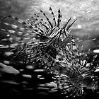 Here fishy fishy by Darren Bailey LRPS