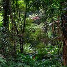 Bunya Mountains by altmarkphoto