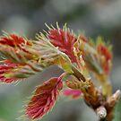 Poison Oak by Barbara Anderson