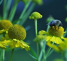 Don't Worry, Bee Happy! by Donnie Voelker
