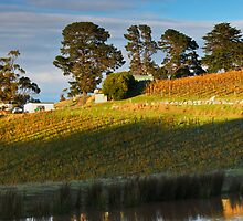 Tinderbox Vineyard in Autumn by Chris Cobern