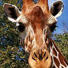 Giraffe by ☼Laughing Bones☾