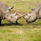 White Rhino's Cross Horns by Cecily McCarthy