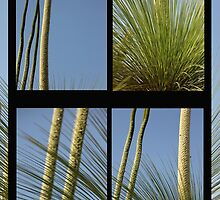 Xanthorrhoea Collage by Carol James