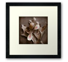 Hickory Nut Seed Emerging Framed Print