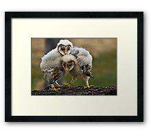 Baby Barn Owls Framed Print