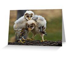 Baby Barn Owls Greeting Card