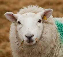 Sheep! by Michael Neal