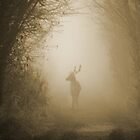 Stag in the Mist  by Isaac Circuit