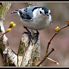 The Nuthatch by Gail Jones