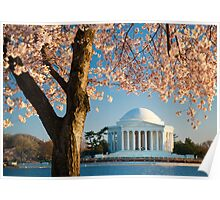 Jefferson and Cherry Blossoms Poster
