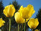 Yellow Tulip Flowers Garden art Baslee Troutman by BasleeArtPrints