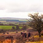 Exmoor Ponies by David-J