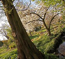 A Wonky View Of Beth Chatto Gardens by Mat Robinson