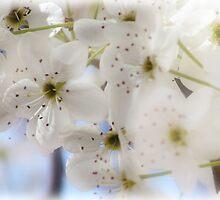 Spring Time by vigor