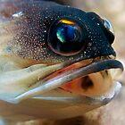 Yellow-banded Jawfish  by Imaginarium