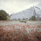 Approach to the Conservatory - Ballarat by lencurrie
