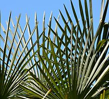 Palm Sunday Palms... by Carol Clifford