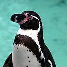 Penguin Portrait by Luci Mahon