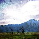 Trees Of Taos by Laughing Bones